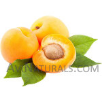 apricot kernel oil Suppliers