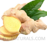 ginger oil Suppliers