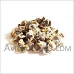 moringa-seed-oil
