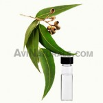 Buy Eucalyptus Oil