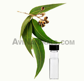 Eucalyptus Oil Wholesale Supplier and Manufacturer in India