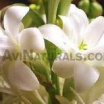 Tuberose-Floral-Absolute-Oil