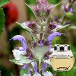 clary-sage-floral-water