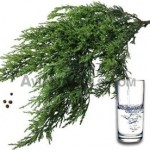 cypress-water