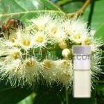 eucalyptus-hydrosol