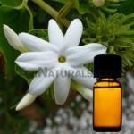 jasmine-sambac