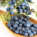 juniper-berry-hydrosol