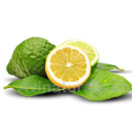 Bergamot Oil Suppliers