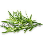 rosemary oil Suppliers
