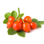 rosehip oil suppliers