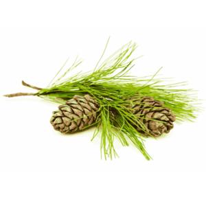 certified-organic-cedarwood-essential-oil
