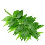 certified-organic-neem-carrier-oil