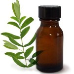 certified-organic-tea-tree-essential-oil