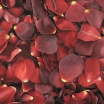 dried rose petals Suppliers