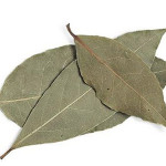 dried bay leaves Suppliers