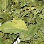 dried neem eaves Suppliers